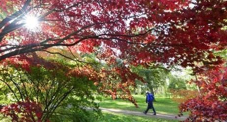 Westonbirt arboretum autumn