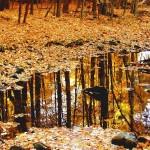 autumn garden chores