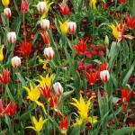eden restored april planting