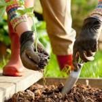 gardening in june
