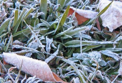first garden frost