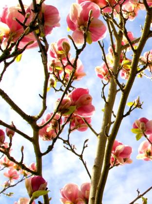 april planting ideas