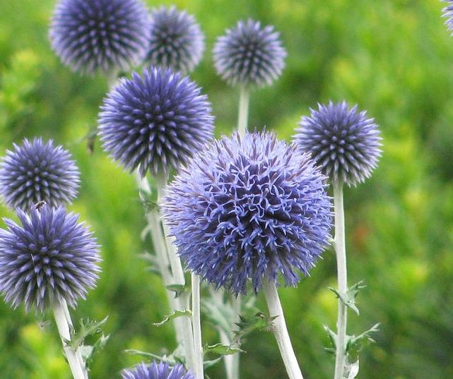 Garden Design Blog August Flowers Top Choices For Uk
